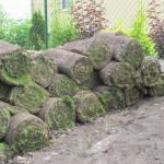 trávník osít nebo položit koberec